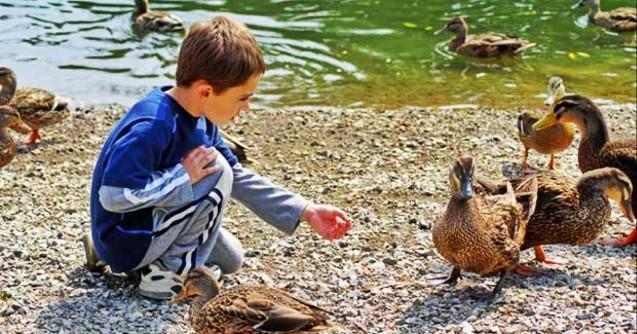 Çocuğunuz Bir Ördekten Ne Öğrenebilir?